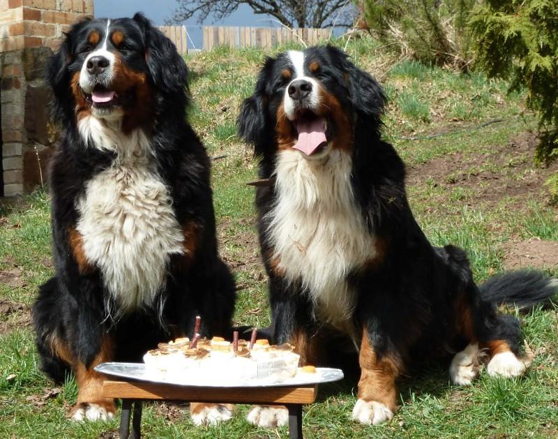 naši pejsci slaví také narozeniny